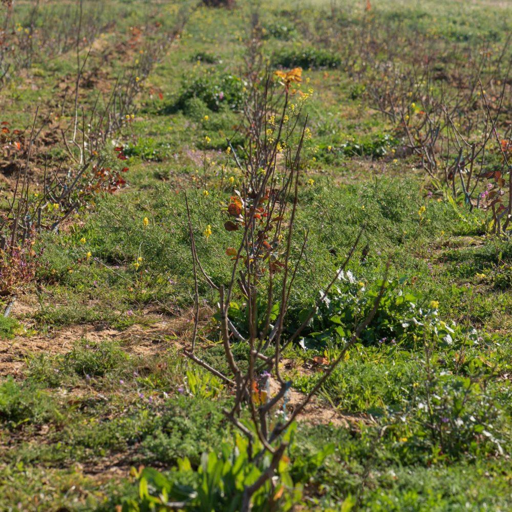 Diputación y Appistaco colaboran para implantar el pistacho en Jaén